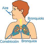 Funcionamiento en una crisis de asma