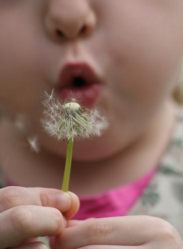 Principales grupos alérgicos